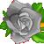 :icongrayrose1plz: