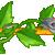 :icongrayrose2plz: