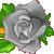 :icongrayrose6plz: