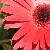 :icongreen-beetle:
