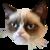 :icongrumpy-cat-plzz: