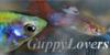 :iconguppylovers: