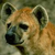 :iconhappily-morbid-hyena: