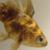 :iconhello-big-fish: