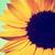 :iconhimawarisunflower: