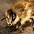 :iconhoney-bee89: