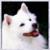 :iconhope-lessly: