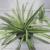 :iconhouse--plants:
