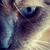 :iconhowling-wolf1:
