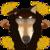 :iconhowlingghostwolf:
