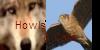 :iconhowlsandcalls: