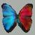 :iconhummingbird88-stock: