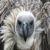 :iconhuntingosprey: