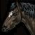 :iconhydraequus:
