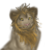 :iconhyenas-and-lions: