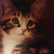 :iconi3kitty-cat-cutiei3: