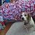 :iconi-r-beagle: