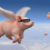 :iconifpigscouldfly-1: