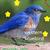 :iconilovebirds18: