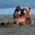 :iconima-bear:
