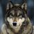 :iconimtherealwolf:
