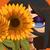 :iconinfinityyoshi: