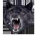 :iconinsanitywolfplz: