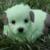 :iconinvaderzim389: