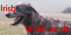 :iconirishwolfhounds: