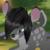 :iconiron-deer: