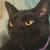 :iconj1nxed-pegasus: