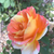 :iconjjwatercolor704: