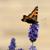 :iconjoac1408: