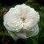 :iconjumbledwire: