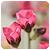 :iconk-photos: