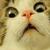 :iconkat-goes-meow: