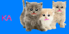 :iconkawaii-adoptions:
