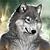 :iconkennawolf: