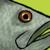 :iconkiewiefish: