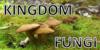 :iconkingdom-fungi: