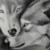 :iconkingwolf123: