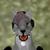 :iconkippyfwolf123: