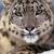 :iconkittycat-stefi: