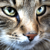 :iconkiwi-da-cat: