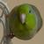 :iconkiwifrukt: