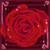 :iconkrimzon-rose: