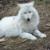 :iconkuuwolf: