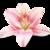 :iconladies-of-the-lily: