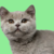 :iconlame-can-of-soup: