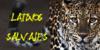 :iconlatinossalvajes:
